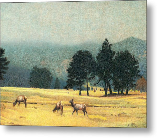 Impression Evergreen Colorado Metal Print