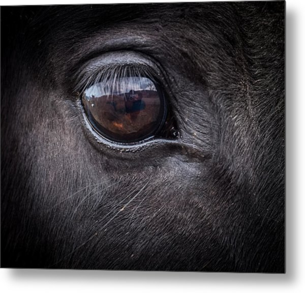 In A Horse's Eye Metal Print