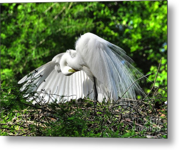 In All His Glory Metal Print