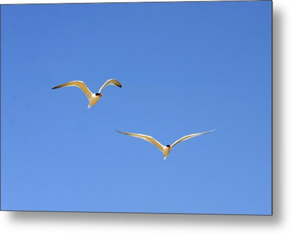 In Flight Metal Print