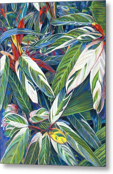 Stromanthe Sanguinea Metal Print