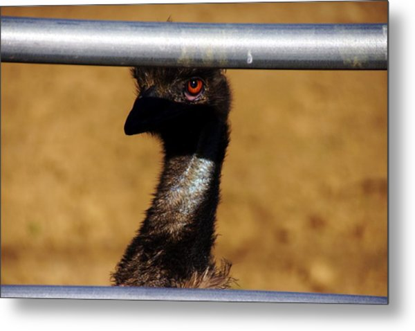 In The Eye Of The Emu Metal Print by Michael Courtney