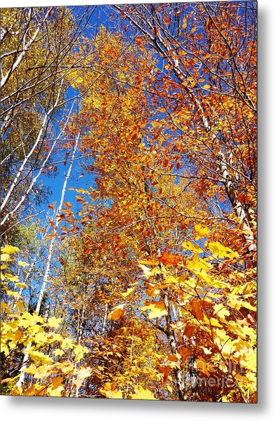 Metal Print featuring the photograph In The Forest At Fall by Cristina Stefan