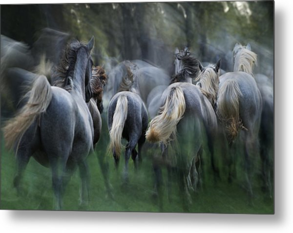 In The Gallop Metal Print by Milan Malovrh