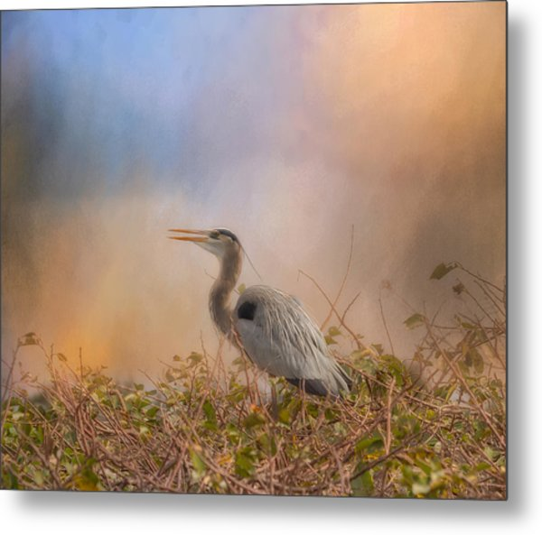 In The Nest - Great Blue Heron Metal Print