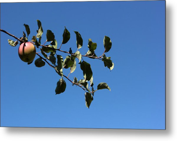 In The Orchard Metal Print by Mary Bedy