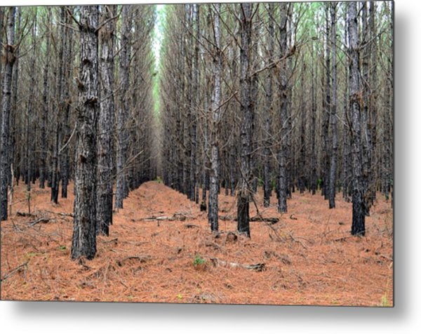 In The Pines Metal Print by Bob Jackson