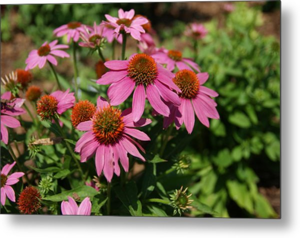 In The Pink Metal Print by Leigh Ann Hartsfield