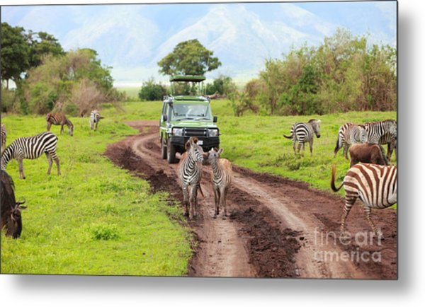 In The Safari Metal Print by Boon Mee
