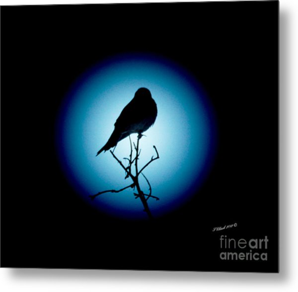 In The Spotlight Metal Print by Timothy Clinch