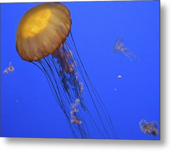 Metal Print featuring the photograph In The Tank by Ralph Jones