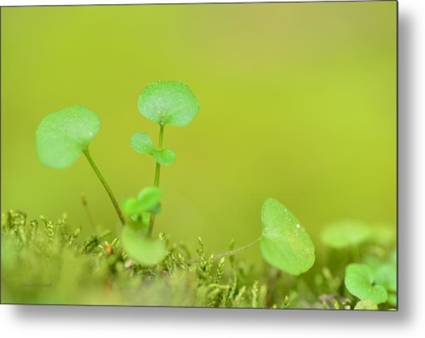 In The Valley Of The Leprechauns Metal Print