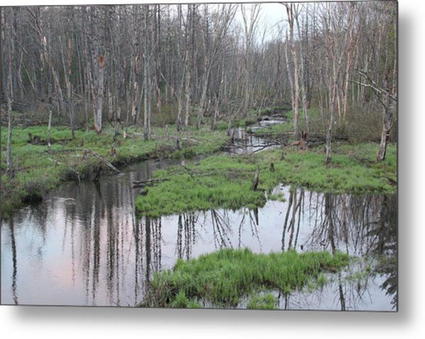 In The Woods Metal Print by John Ricard jr