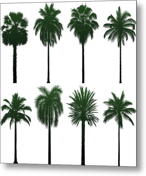 Incredibly Detailed Palm Trees Metal Print by Leontura