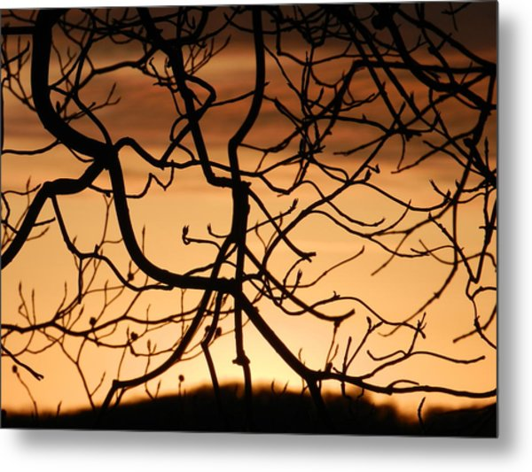 Incredulity Metal Print by Nicholas Novello