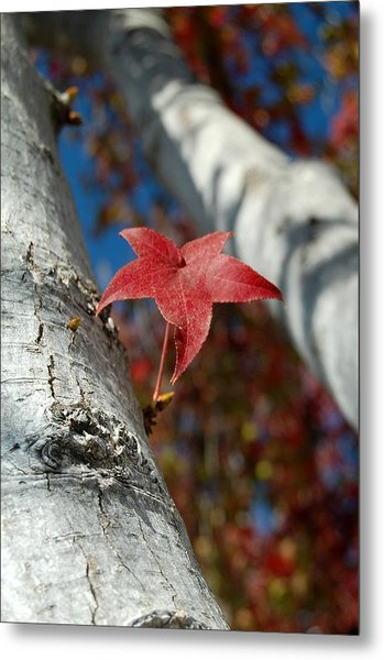 Independent Growth Metal Print by Jean Booth