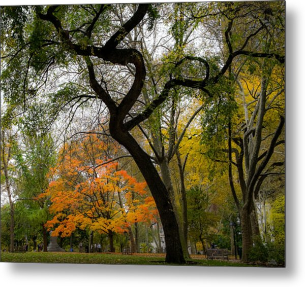 Independent Trees Metal Print