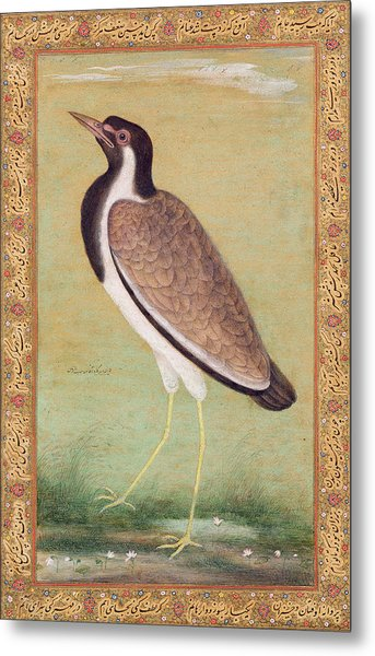 Indian Lapwing Metal Print