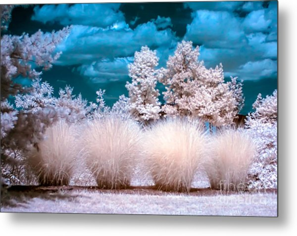 Infrared Bushes Metal Print