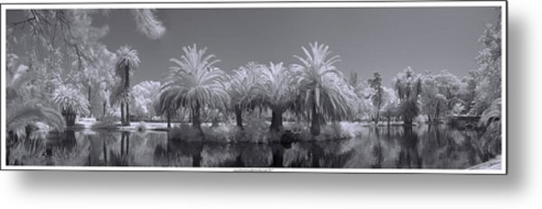 Infrared On A Sunny Afternoon Metal Print