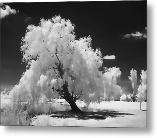 Infrared Willow Tree Study  Metal Print