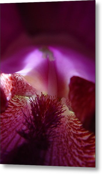 Inner Iris_4of4_purple Metal Print