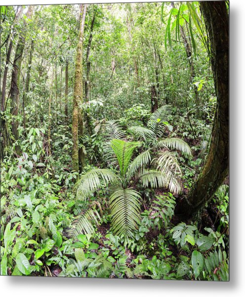 Interior Of Tropical Rainforest Metal Print