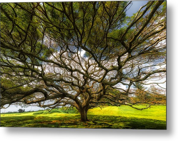 Intertwined Metal Print by Chuck Jason