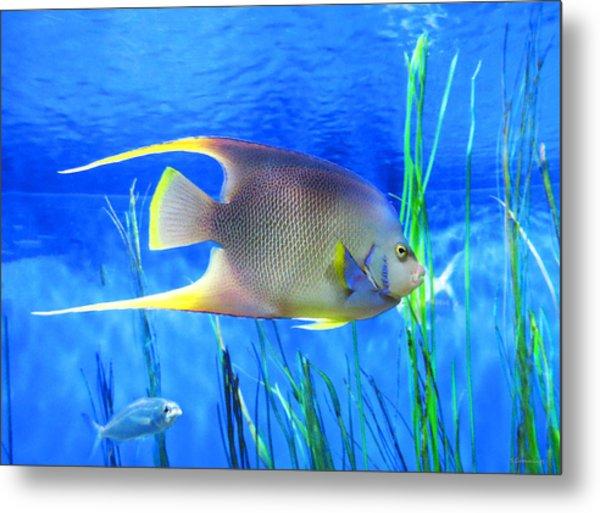 Into Blue - Tropical Fish By Sharon Cummings Metal Print