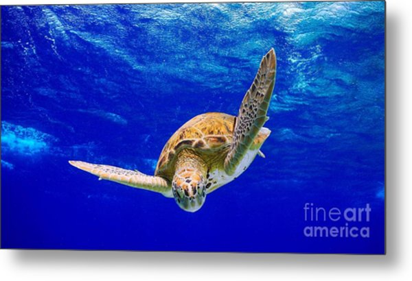 Into The Blue Metal Print by Isabelle Kuehn
