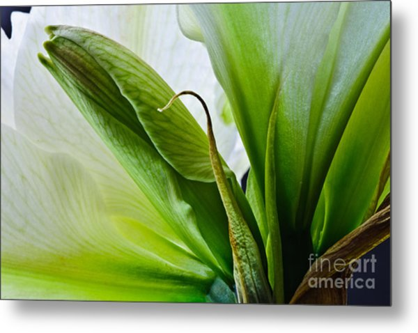 Into The Center 2012 Metal Print