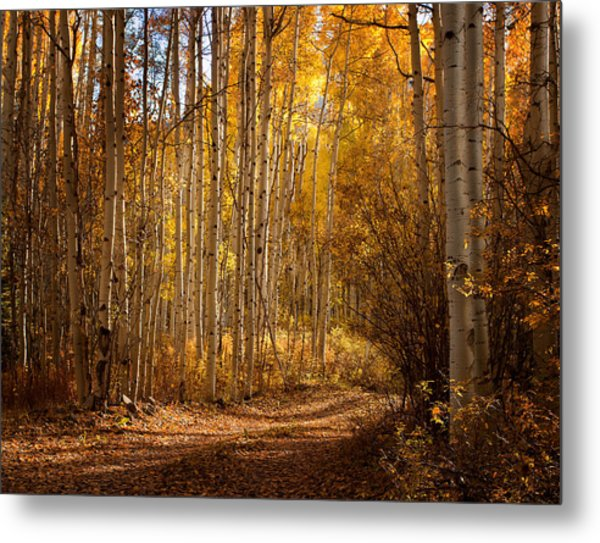 Into The Color Metal Print
