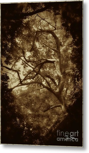 Into The Dark Wood Metal Print