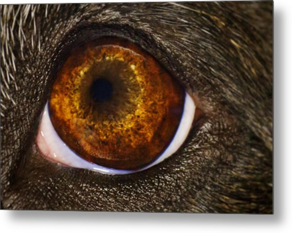 Into The Eye Of The Pit Metal Print