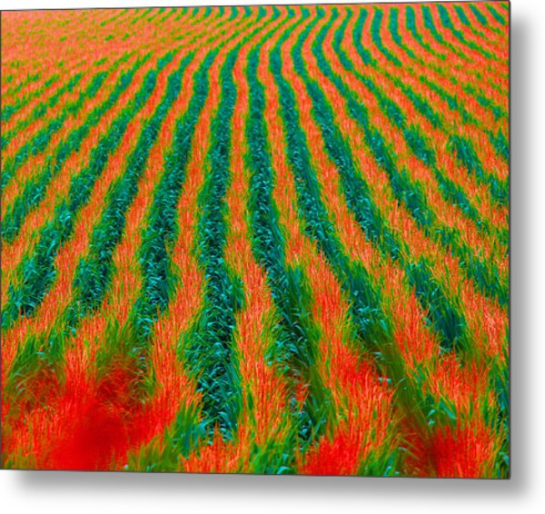 Iowa In August Metal Print by Angie Phillips aka Angieclementine