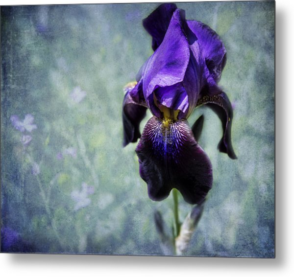 Iris - Purple And Blue - Flowers Metal Print