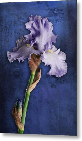 Metal Print featuring the photograph Iris Art Lavender And Blue by Bob Coates