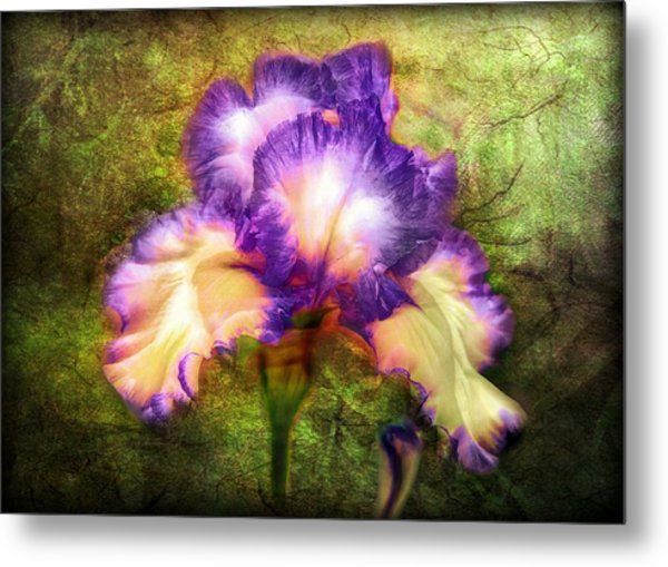 Iris Beauty Metal Print