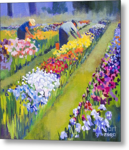 Iris Farm Metal Print by Bernard Marks