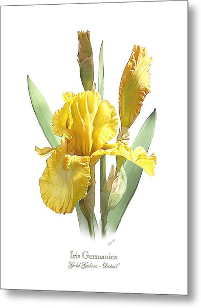 Iris Germanica Gold Galore Metal Print
