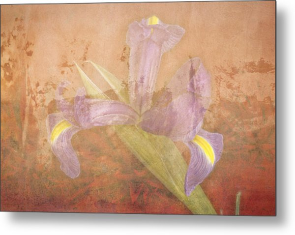 Metal Print featuring the photograph Iris Number Four by Bob Coates
