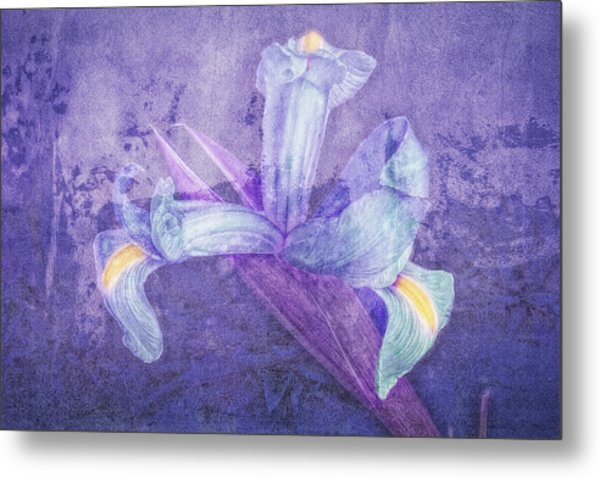 Metal Print featuring the photograph Iris Number Seven by Bob Coates