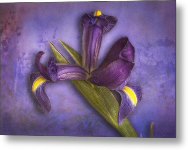 Metal Print featuring the photograph Iris Number Six by Bob Coates