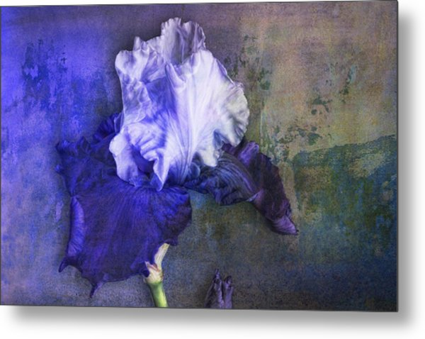 Metal Print featuring the photograph Iris Number Three by Bob Coates