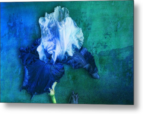 Metal Print featuring the photograph Iris Number Two by Bob Coates