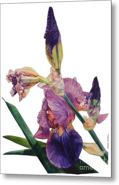 Watercolor Of A Tall Bearded Iris In A Color Rhapsody Metal Print