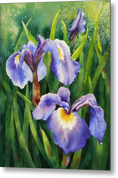Iris Setosa Alaska Metal Print