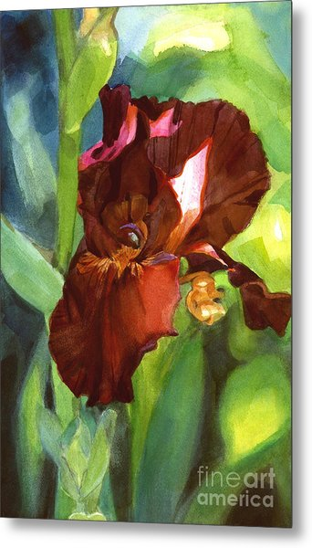Watercolor Of A Tall Bearded Iris In Sienna Red Metal Print