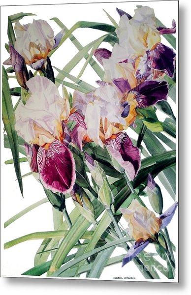 Watercolor Of Tall Bearded Irises I Call Iris Vivaldi Spring Metal Print
