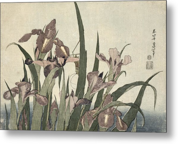 Irises And Grasshopper Metal Print